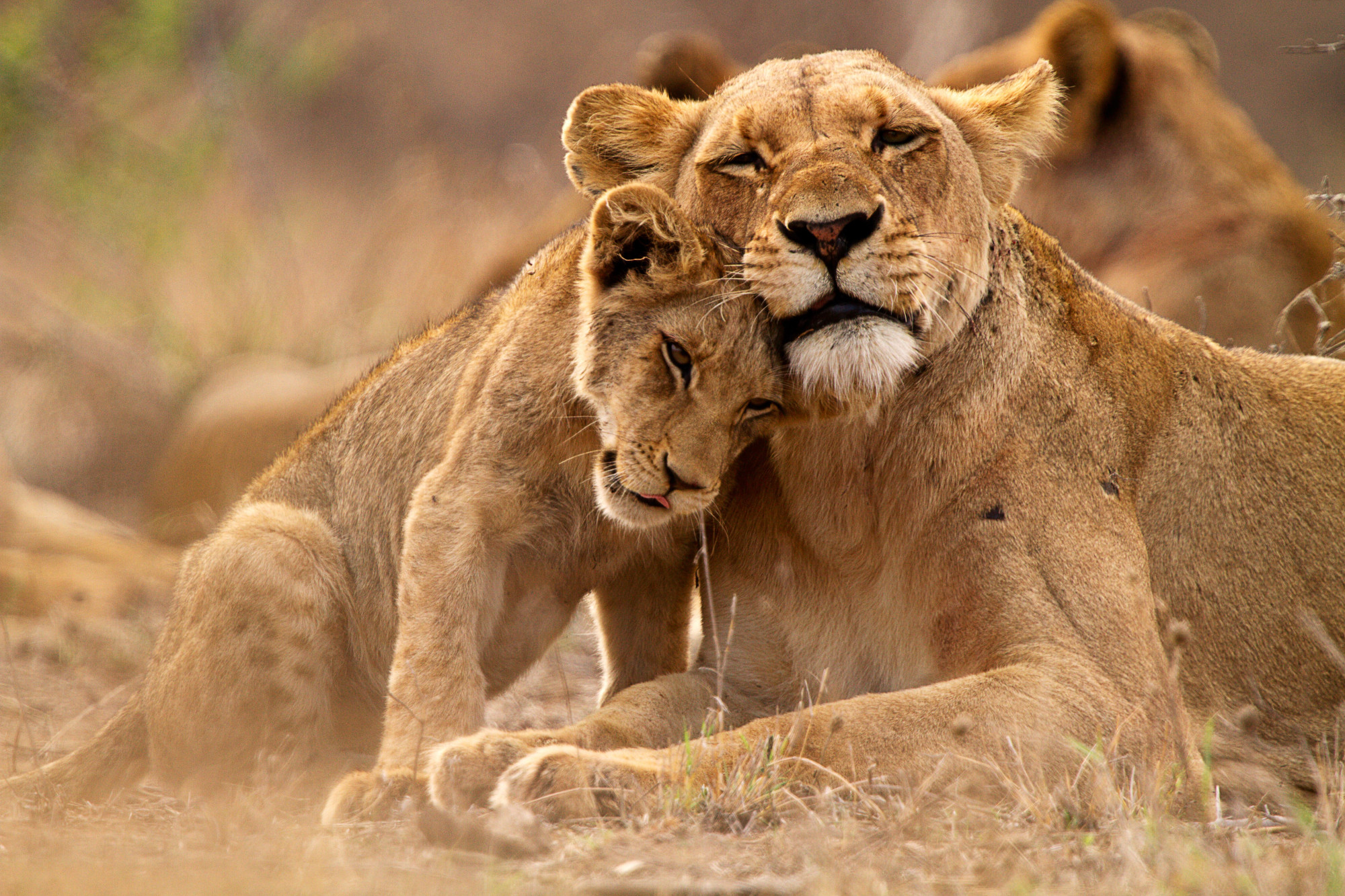 Greater Kruger National Park