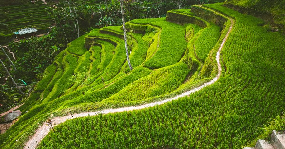 Bali Tegalalang Rice Fields