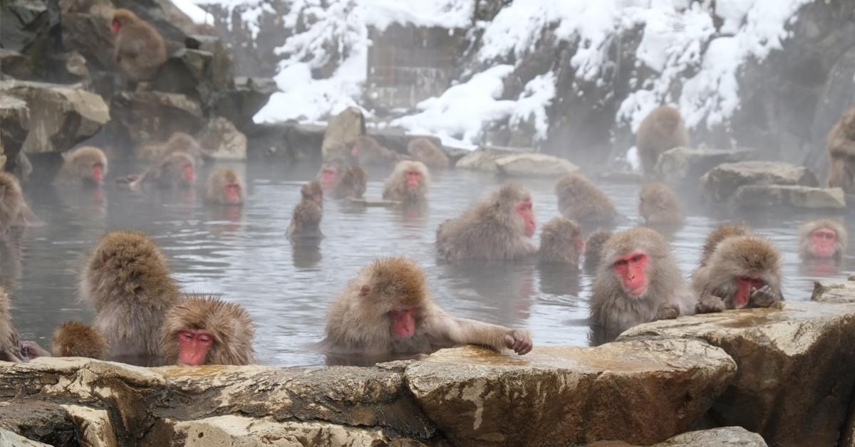 Hokkaido Jigokudani Valley